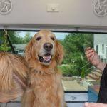 Groomer With Dog