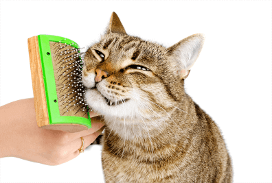 Cat Being Brushed